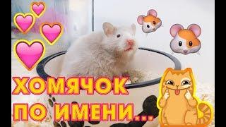 ДАЛА ИМЯ ХОМЯЧКУ :) САМЫЙ МИМИШНЫЙ ХОМА)) #59