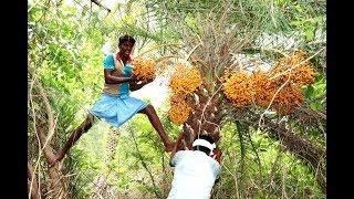 Village Boys Harvesting Fresh WILD DATE-PALM Fruits in my village | phoenix sylvestris