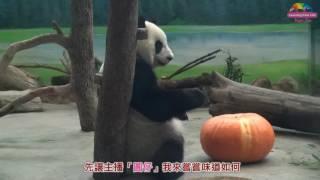 「圓仔」主播響應生物多樣性日,代言推廣食農教育! thumbnail