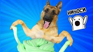 БЕЗ ЗАГУСТИТЕЛЯ?! Собака управляет моим слаймом Часть 2/ Лизун из случайных ингредиентов