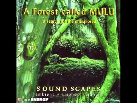 A Forest Called Mulu - The Mind And It's Consciousness