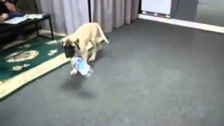 Reuben plays with a 2 liter soda bottle