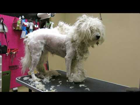 Winnie Matted Dog Groom Video 1 of 4