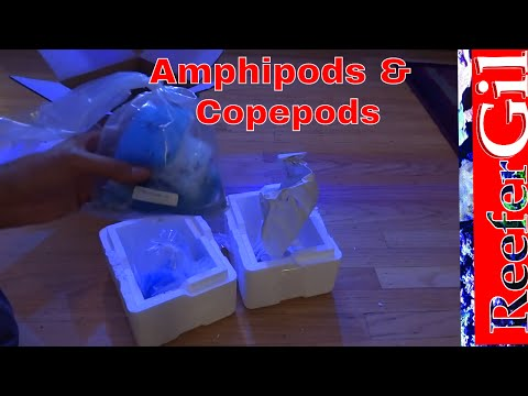 Amphipods and Copepods Addition: 75 Gallon Reef