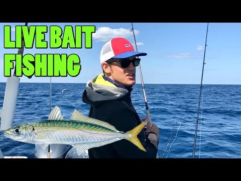 Live Bait Offshore Wreck Fishing | Favorite Bait