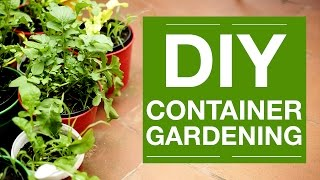 How to Grow Anything - Container Gardening