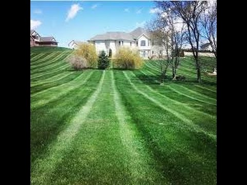 how to get a green lawn fast
