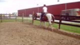 Twister Double H Horse Farm 25 rides