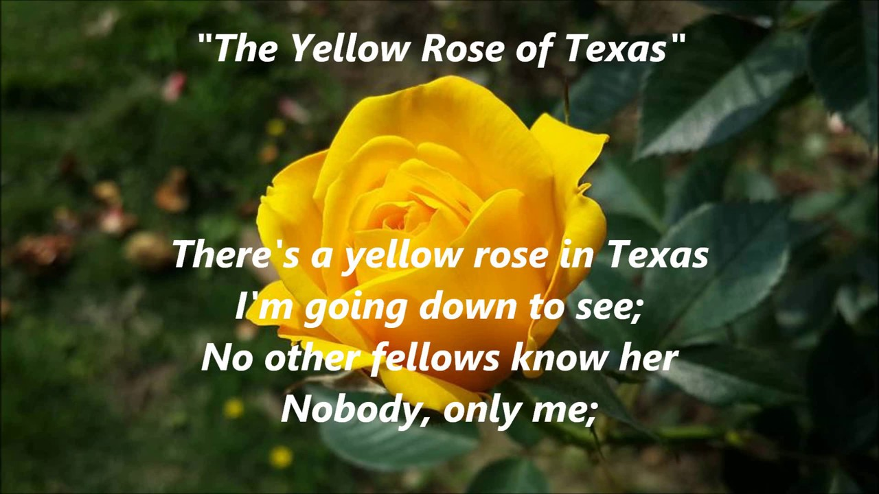 The yellow rose of texas songwords lyrics best top popular favorite the yellow rose of texas songwords lyrics best top popular favorite trending sing along song songs mightylinksfo
