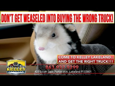 Kelley Lakeland | Weasel Commercial #1 | KelleyLakeland.com