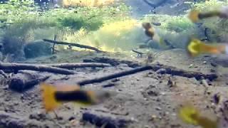 ☺Аквариумные рыбы в естественной среде круглый год