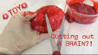 what s inside a squishy brain ii cutting open a toy brain ii