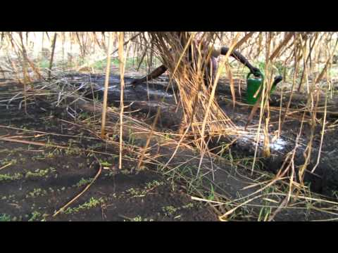 TRADIEX Tree Project, SEBELE, FIZI Territory, D.R.Congo