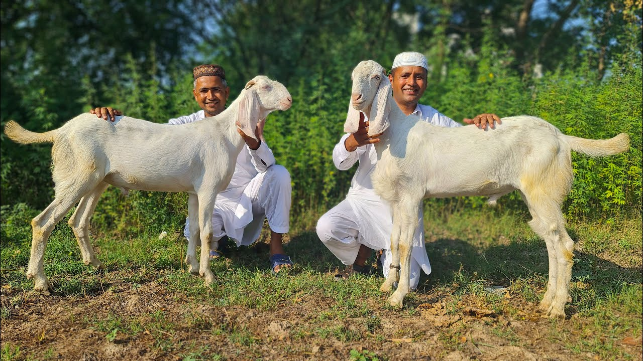 2 Full GOAT Gravy Prepared by Mubashir Saddique | 2 FULL GOAT Eid Lunch | Village Food Secrets