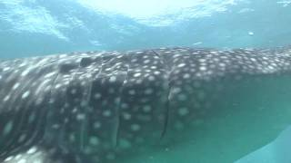 Maldives-Indian Ocean Pearls