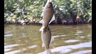Риболовля в Чебенях