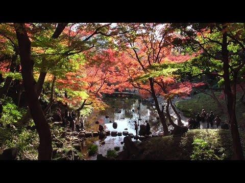 東京都立小石川後楽園の紅葉 2015年 autumn leaves of Tokyo Metropolitan Koishikawa Korakuen (garden)