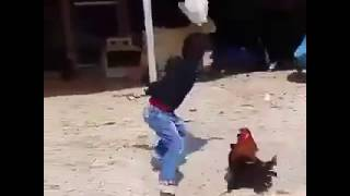 Anak Kecil Berantem Sama Ayam Kocak Abis