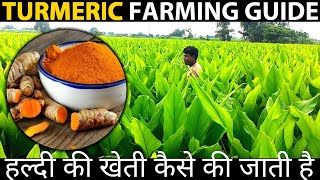 TURMERIC FARMING in INDIA | TURMERIC CULTIVATION | Haldi ki Kheti Kaise Kare