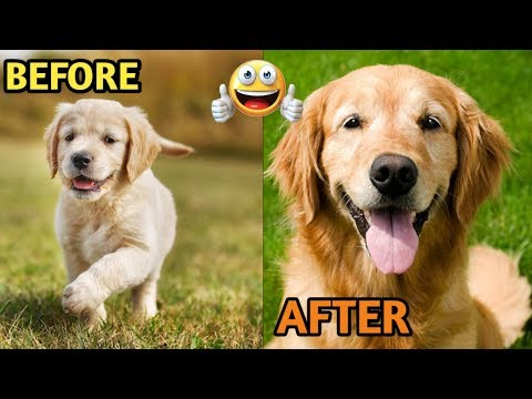 20 Dogs Before and After growing up / Dogs before and after