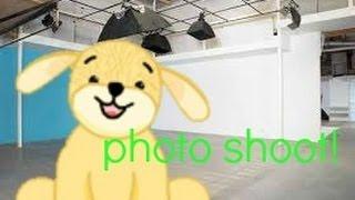 Golden retriever: photo shoot