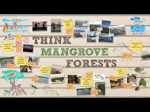 Think Mangrove Forests