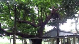 沖縄県多良間島の聖域   「 土原ウガム 」