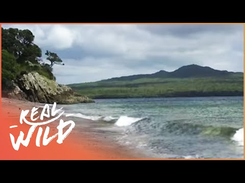 Auckland's Natural Wonders  [Wild Coasts Documentary] | Wild Things