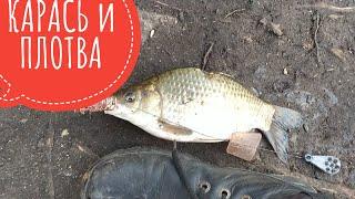 КАРАСЬ и ПЛОТВА на ФИДЕР и ПРУЖИНУ в Декабре Рыбалка в Запорожье 2020