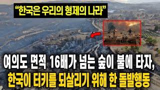 여의도 면적 16배가 넘느 숲이 불에 타자, 한국이 터…