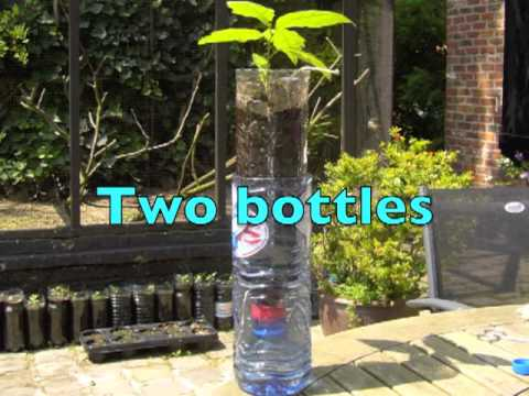 How To Grow Plants In Bottles Youtube