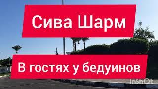 Шарм эль Шейх 2020 4 5 декабря Отель Сива В гостях у бедуинов Погода и море