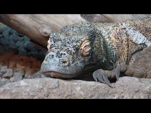 Download Youtube: REAL Creatures Scientists Thought Were FAKE!