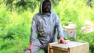 пчеловодство : выбираем место под пасеку