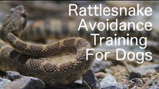 Rattlesnakedog.com: Rattlesnake Avoidance Training For Dogs