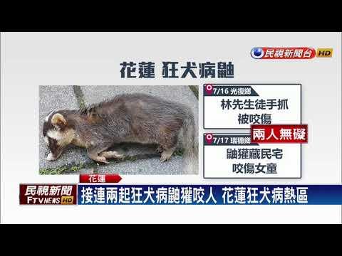 接連兩起狂犬病鼬獾咬人 花蓮狂犬病熱區-民視新聞