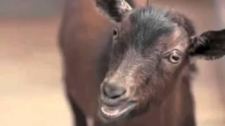 Skrillex - Kyoto (Goat Remix)