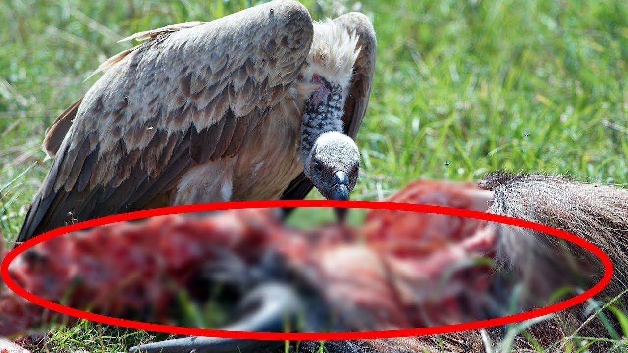 Download When Birds of Prey Attack