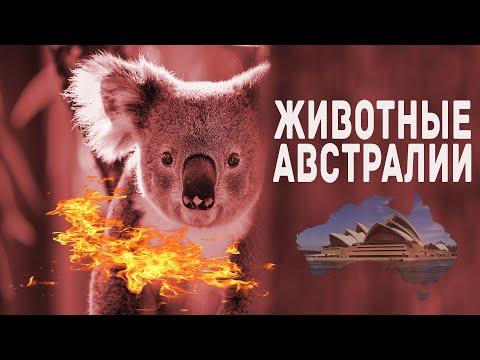Пожары в Австралии! Видео животных которых спасали люди! Австралия 2020! Australia bushfires!