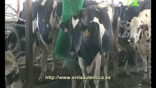 Agroseno-Leche de vaca y derivados lácteos