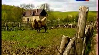 видео: Необычное фермерское хозяйство