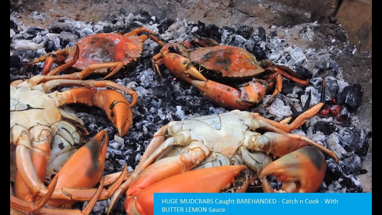 BIG DELICIOUS CRABS (How to catch, cook, and eat them)