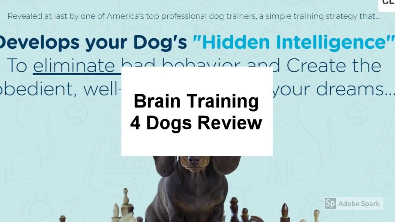 Size Review  Brain Training 4 Dogs