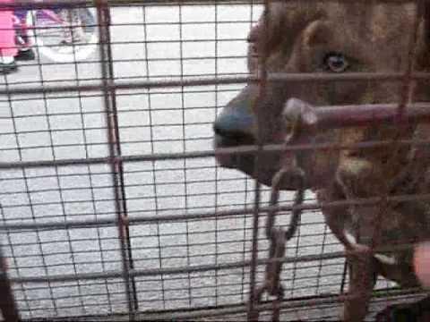 Dogs at Kenneth Hahn Park captured by Eldad Hagar