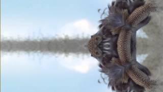 Walkner.Moestl - Heaven or Hell Music Video