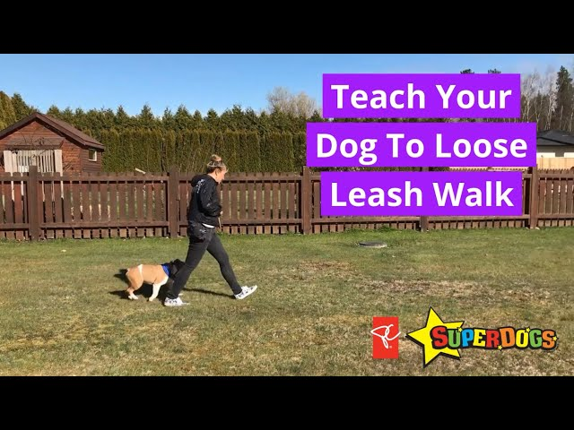 SuperDogs | Loose Leash Walking With Your Dog | Dog Training