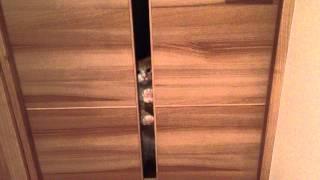 ウチの末っ子猫が頑張ってカリカリしてます。