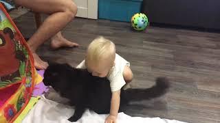 Ребёнок пытается поднять кота!! Эмоции хахаха!!!