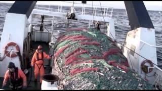 Fishing Gear PART 4 - Semi Pelagic Trawls