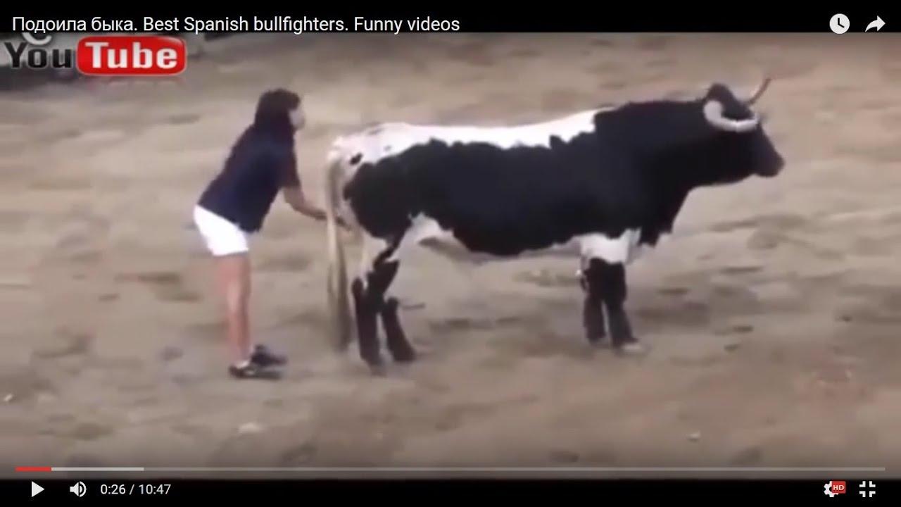 Быки ебут коров видео